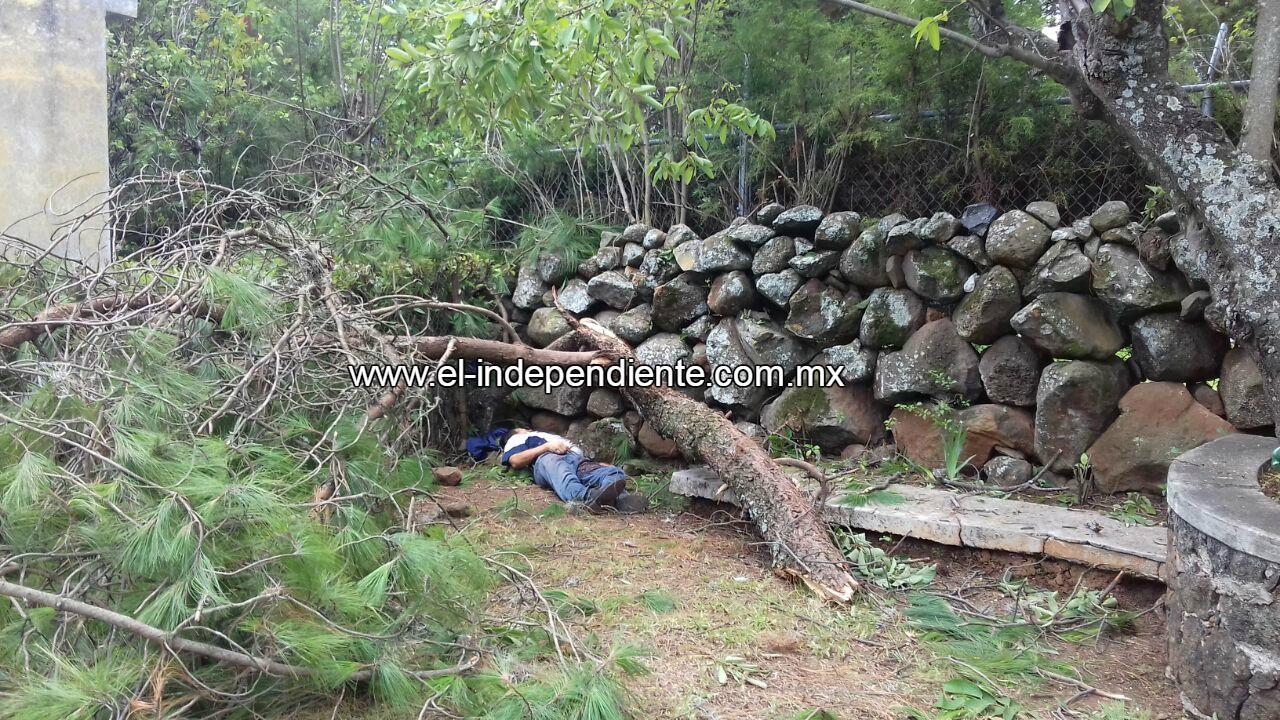 Muere al caer de un árbol, en Tzocurio.
