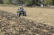 Garantizan producción de casi 7 mil 500 hectáreas de cultivo