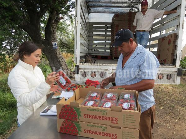 Sin certificación y tecnificación, agricultores no podrán exportar