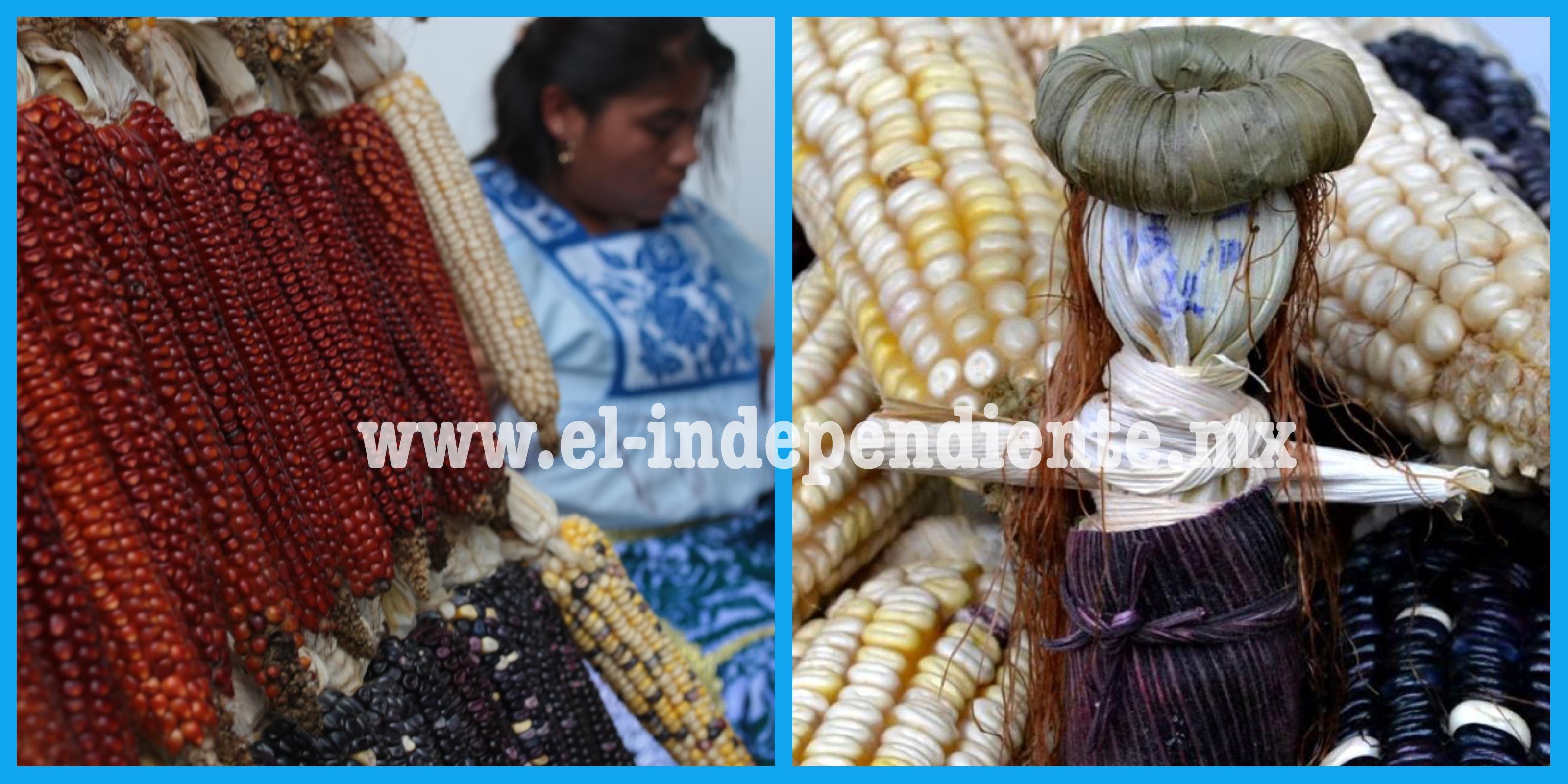 El maíz, el origen del tesoro gastronómico de Michoacán