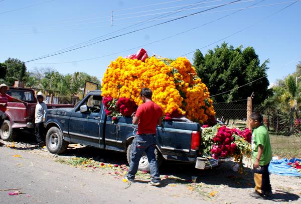 Flor de cempasúchil alcanzará los 90 pesos para Día de Muertos