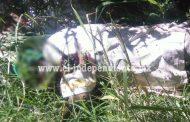 Encuentran cadáver baleado dentro de canal de riego en Zamora