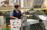 Gracias al apoyo del Gobernador, crece empleo en Michoacán: IMSS