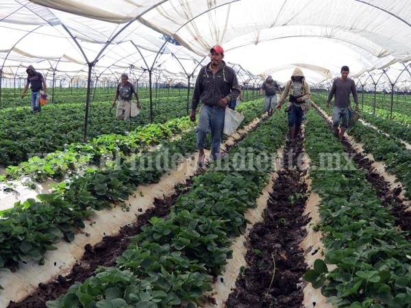 Agricultura sin afectación por las bajas temperaturas