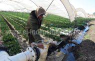Exhortan a pequeños productores a asociarse para aplicar tecnificación
