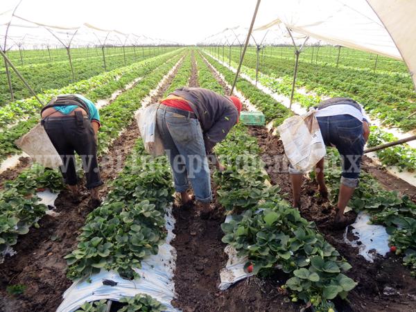 Relativo perjuicio a agricultores, en caso de poner aranceles a productos del campo