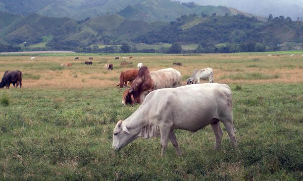 Llama jurisdicción sanitaria a evitar consumo de leche bronca