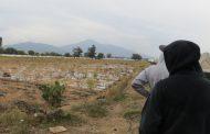 Disminuyó hasta 50 por ciento cultivo de sorgo en Zamora