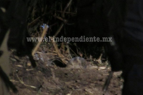 """Hallan cráneo humano en predio cercano al canal de """"Chaparaco"""""""