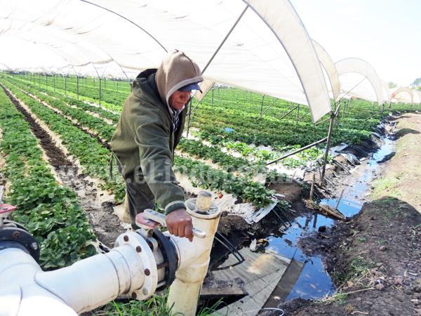 Subsidia SEDRUA con fertilizante a productores de granos