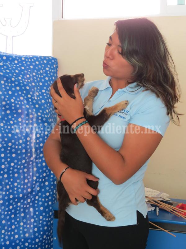 Alrededor de mil 500 perros abandonados en calles de Zamora