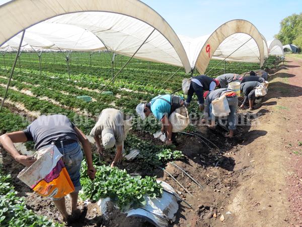 Agricultores están obligados a capacitarse en inocuidad para exportación