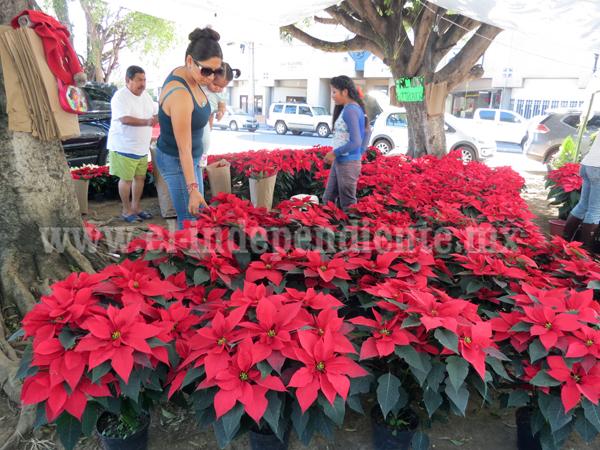 Comerciantes de Flor de Noche Buena esperan que mejoren ventas este año