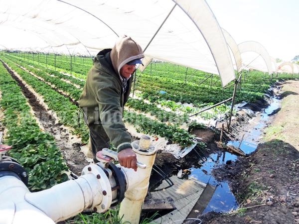 Sin afectaciones en el área agrícola que atiende módulo de riego 3