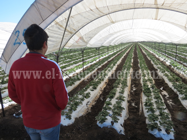 Garantizado abasto de agua para productores en próximo temporal de secas