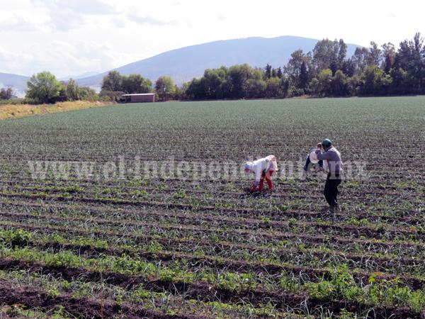 Garantizada agua rodada para irrigar cultivos del distrito 061