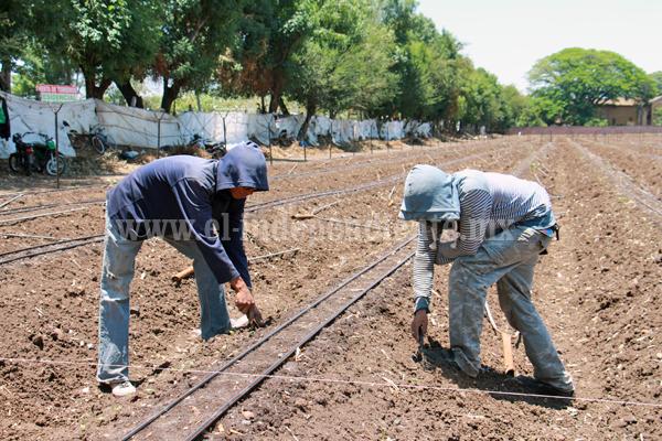 Proponen a agricultores usar fertilizante orgánico para dar rentabilidad a cultivos