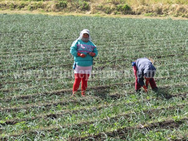 Buscan que productores no dejen tierras ociosas por falta de recursos