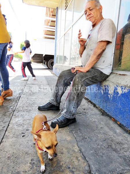 Familias contribuyen a maltrato animal con compra irresponsable de mascotas