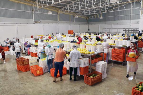 Se cumple con tema de inocuidad agroalimentaria en exportación de fresa