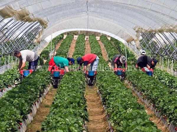 El rubro agrícola, base de la economía zamorana