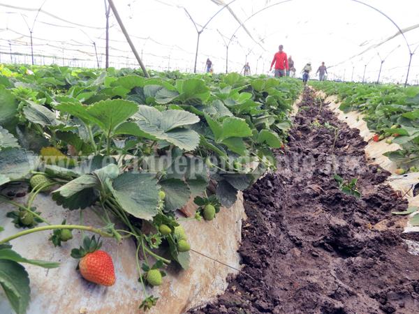Agricultores deben priorizar diversidad de cultivos para mantener agro competitivo
