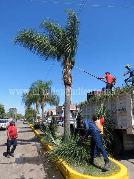 Intensifican revisiones en árboles riesgosos en zona urbana