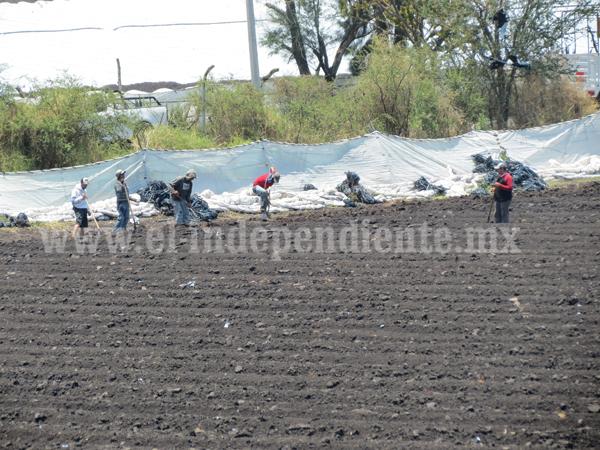 Pierden 300 hectáreas de cultivo de alta productividad en Los Espinos