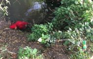 Localizan cadáver baleado de una mujer en un canal de riego de Zamora