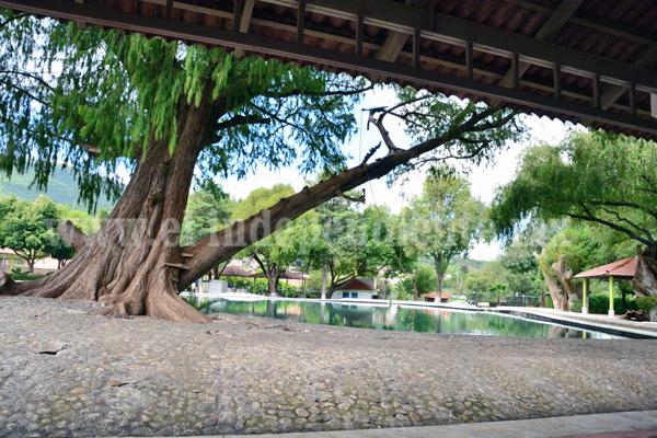 Gobierno Municipal y Seminario Diocesano de Zamora Invitan a Ciudadanía a Foro Ambiental