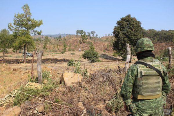 Mesa de Seguridad Ambiental deshabilita 2 huertas ilegales de aguacate en Zacapu