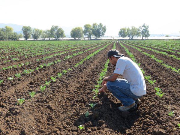 Efecto de sequía comienza a resentirse en agricultura