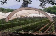 Agricultura en el Valle se vería afectada por aranceles de EU