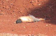 Hallan a hombre muerto en el Cerro de Arena de Jacona