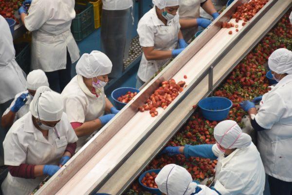 Repunta actividad industrial en Michoacán: Sedeco