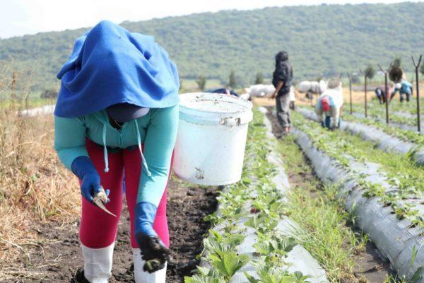 El Gobierno de Zamora prepara capacitación en el buen uso y manejo de agroquímicos.