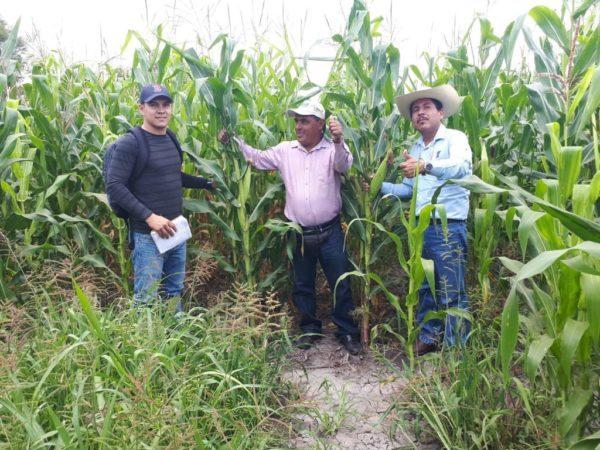 Cae en exageración uso de químicos en cultivos del Valle de Zamora