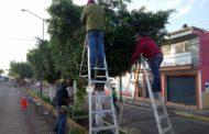 Plaga desconocida seca árboles en Zamora