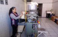 Baja consumo de tortillas por crisis económica de familias