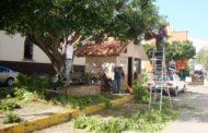 Podan árboles en camellón de calle Plancarte zona centro de Jacona