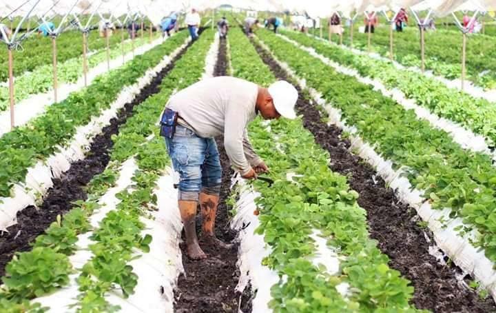Piden a productores agrícolas en Jacona reportar siniestros