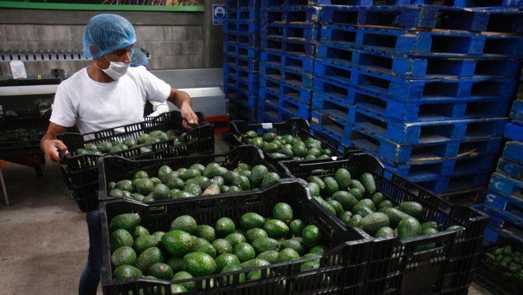 Agro, ganadería y pesca de Michoacán, las segundas más  productivas de México