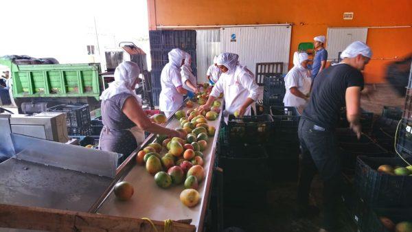 Agroindustrias operan al 70 por ciento; no hay producción agrícola suficiente