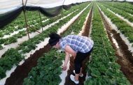 En riesgo actividad agrícola por recorte de recursos federales