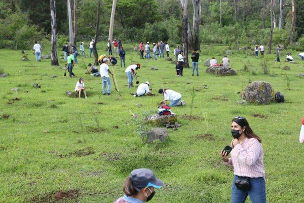 """Un """"Árbol por la Vida"""", presente en 32 municipios de Michoacán"""
