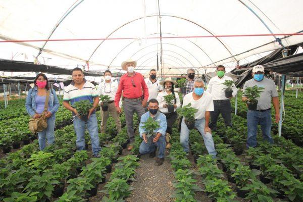Agricultura Sustentable potenciará producción de Nochebuena en Michoacán