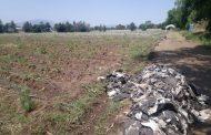 Cae a la mitad hectáreas del cultivo de fresa para próximo temporal