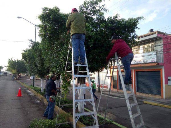 Habrá sanciones de hasta 2 mil pesos por cada árbol talado en Zamora