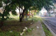 Atiende Gobierno zamorano áreas verdes y fuente en Casas de Altos