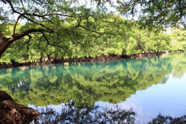 Nueva convivencia en el Lago de Camécuaro